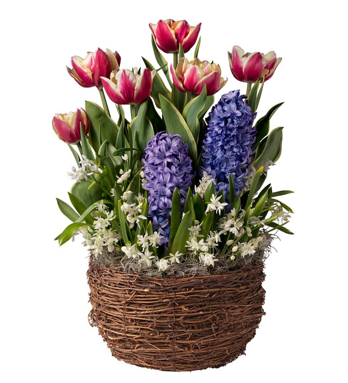 Tulip, Hyacinth and Star of Bethlehem Bulb Garden - Ships January-June 2019