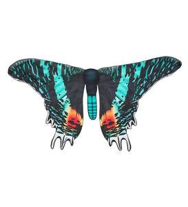 Magnificent Moth Wings - Campylotes