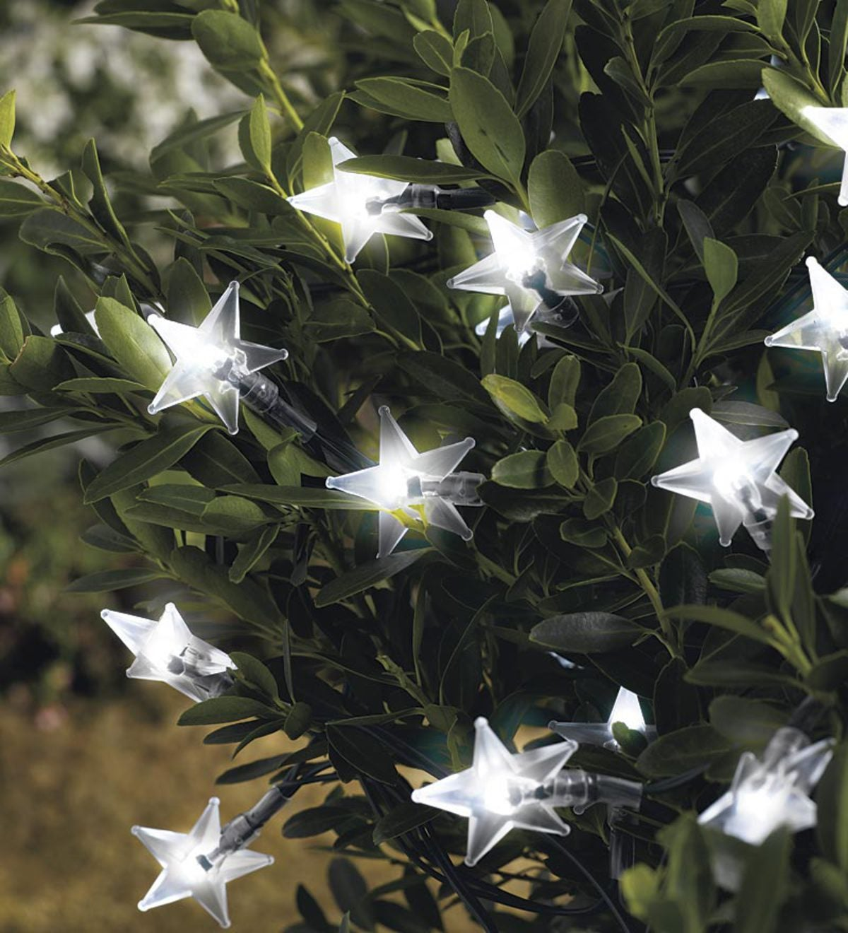Solar Star Lights - White