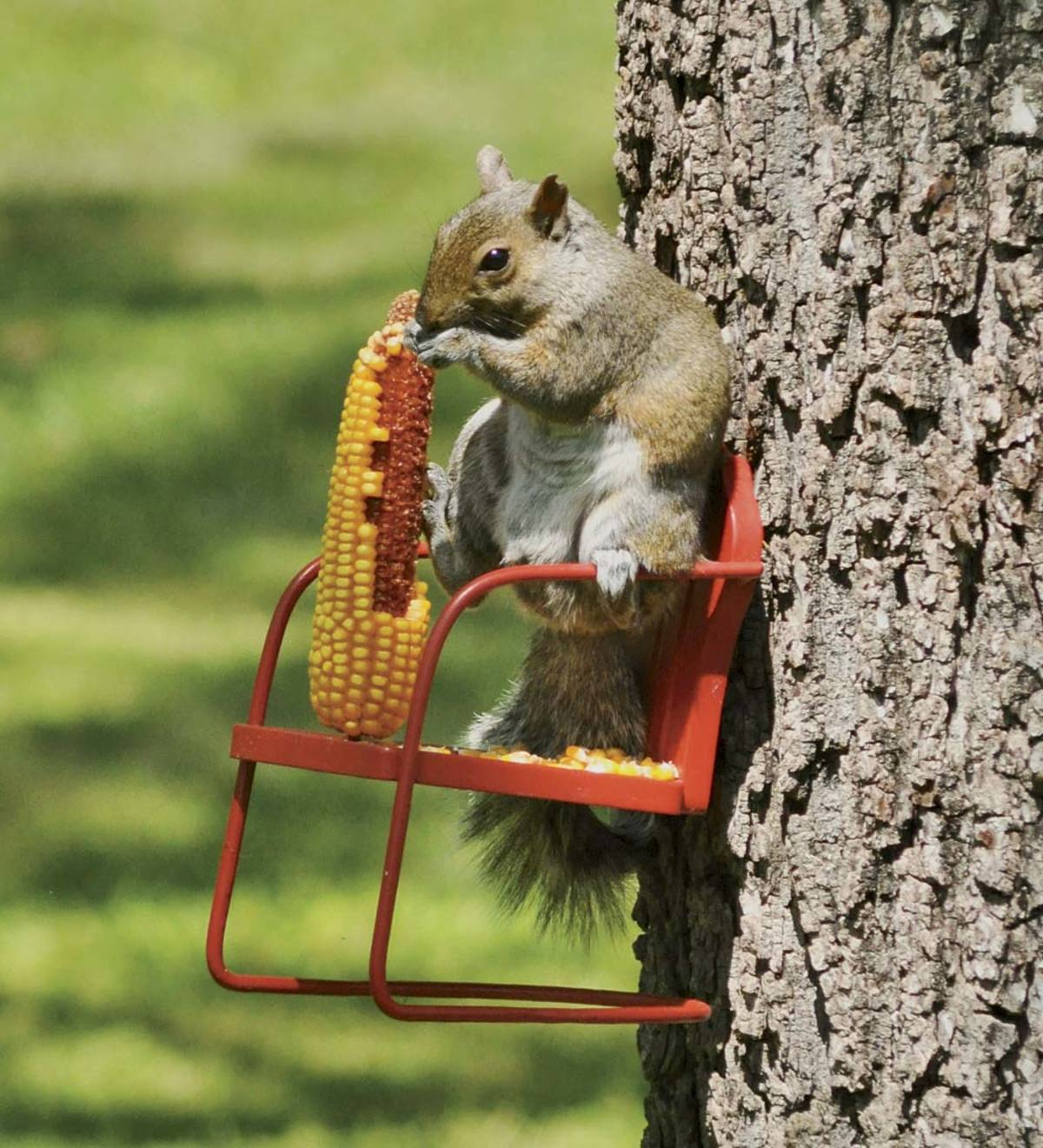 Red Retro Metal Lawn Chair Squirrel Feeder
