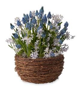Grape Hyacinths and White Scilla Bulb Garden - Ships January-June 2019