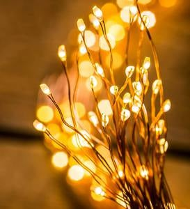 Firefly Bunch Lights, 640 Warm White LEDs on Bendable Wires, Electric, 6'2