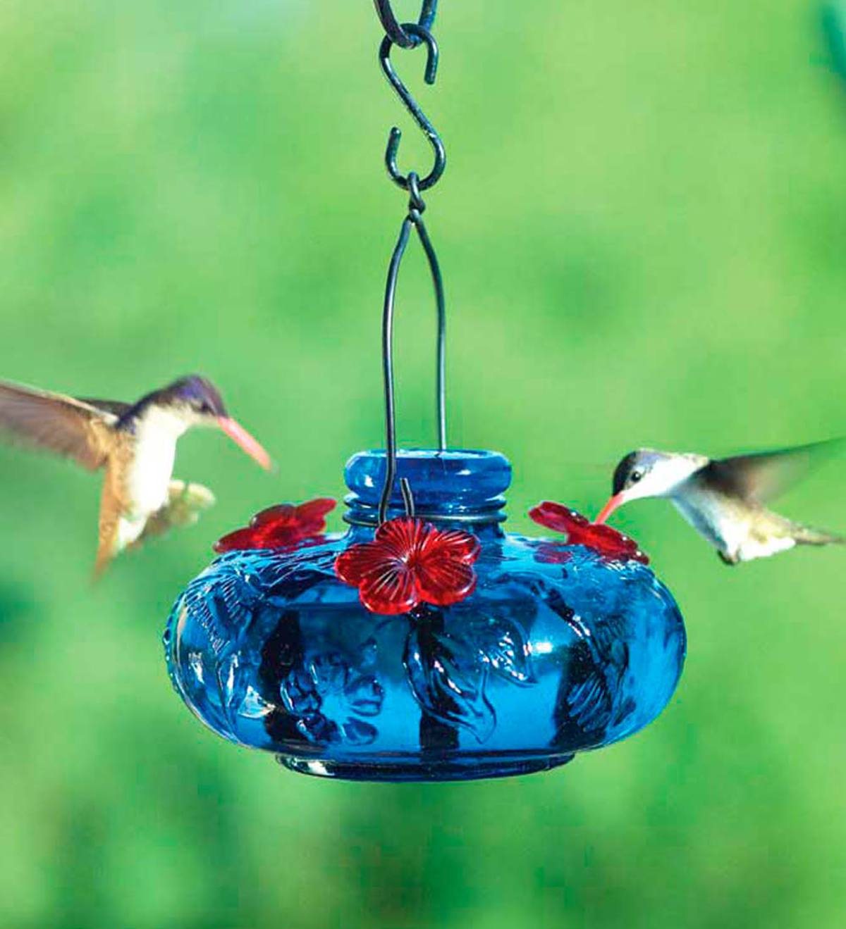 Glass Hummingbird Feeder, Bloom Calliope