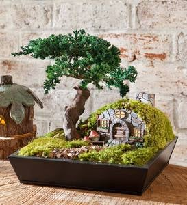 Gnome Home with Preserved Juniper Bonsai Tree