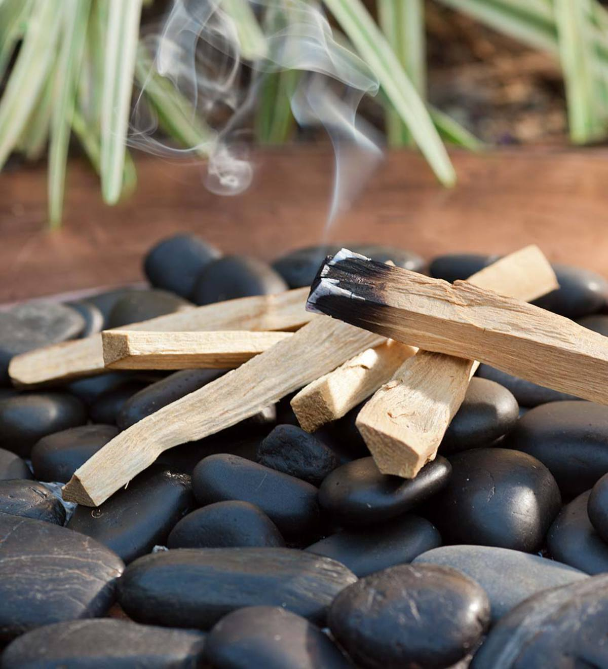 Palo Santo Wood Burning Sticks