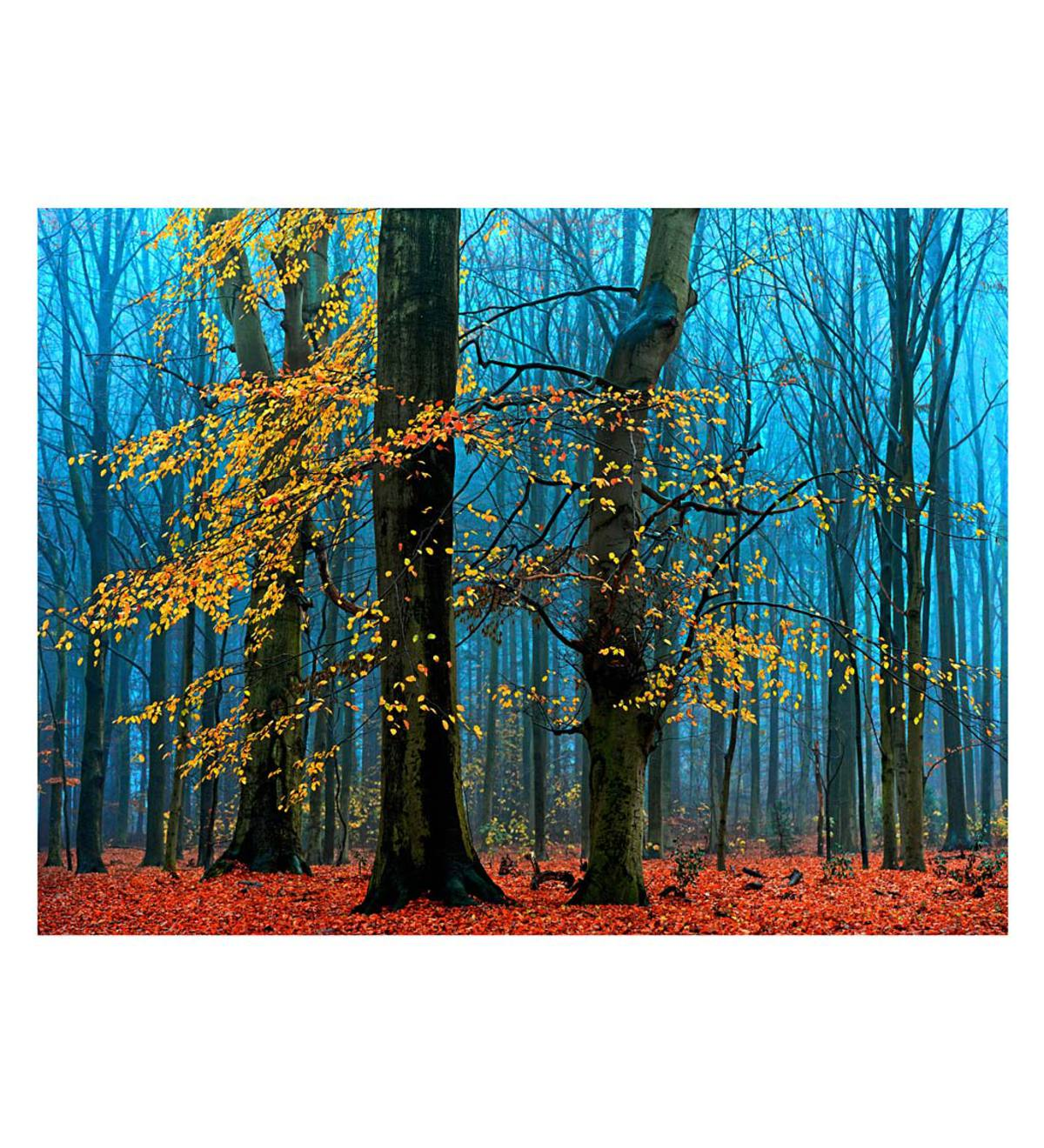 Colorful Autumn Forest Indoor/Outdoor Wall Art on Canvas