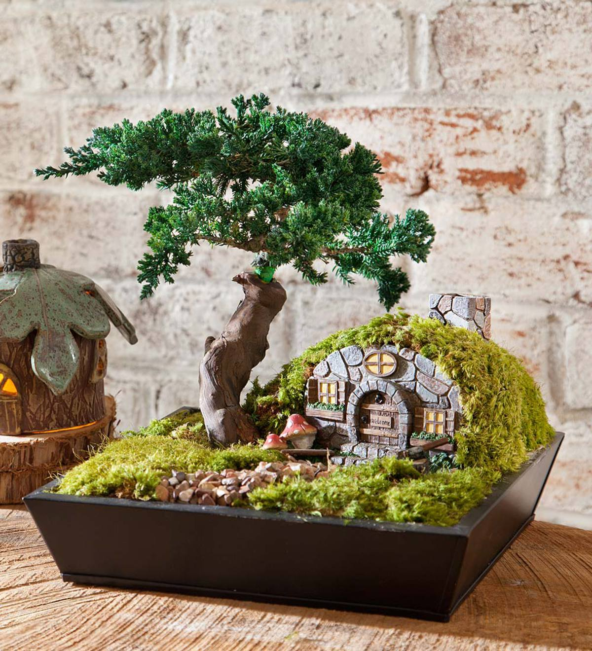 Gnome Home with Juniper Bonsai Tree