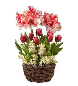 Amaryllis, Tulips and Hyacinth Bulb Garden