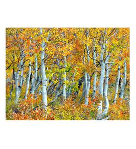 Fall Aspen Trees on Canvas Indoor/Outdoor Wall Art