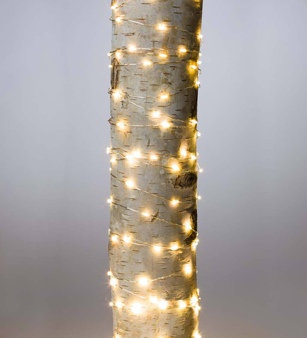 Firefly String Lights, 240 Warm White LEDs on Bendable Wire, Electric, 40'L - Silver