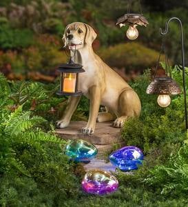 Yellow Lab with Solar Lantern