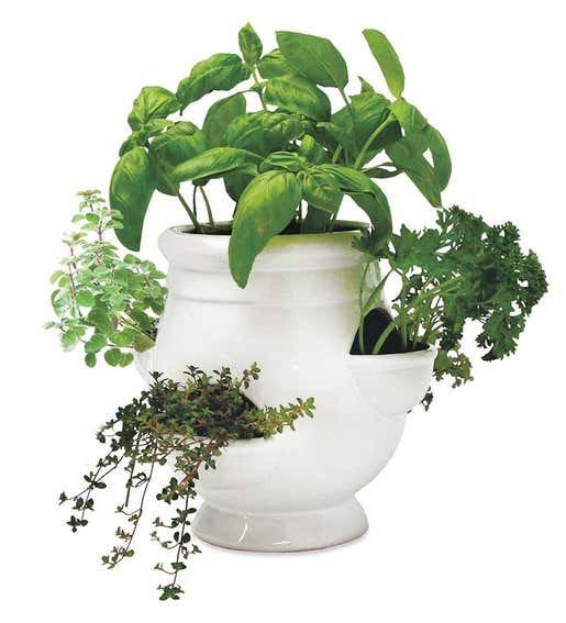 Image of a Grow Your Own Herbs Kit with a white ceramic pot. Shop Gifts for Gardeners
